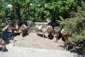 Линдос Родос, Греция – достопримечательности фото ослики