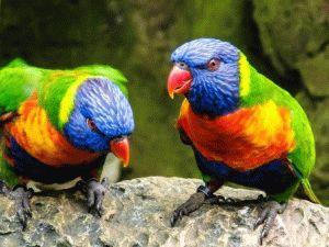 Лоро-парк Тенерифе, Испания шоу попугаев