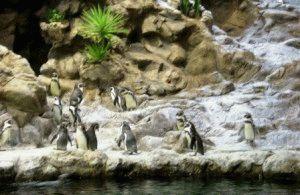 лоро парк пингвины фото