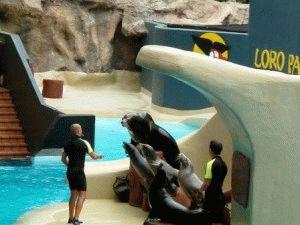 лоро парк шоу морских котиков фото