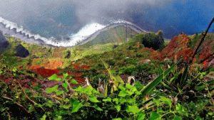 Отдых на острове Мадейра фото природа
