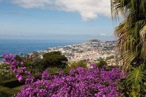 Отдых на острове Мадейра фото
