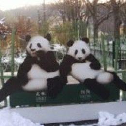 Зоопарк в Вене (Шенбрунн) – посетить обязательно!