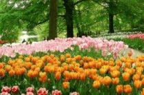 Куда поехать отдыхать в мае: весна, цветы, скорость