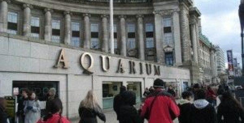 Лондонский Аквариум — Морская жизнь в центре Лондона