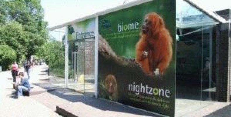 Лондонский зоопарк (London Zoo) – тесное общение с животными
