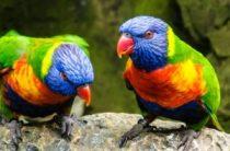 Лоро-парк (Тенерифе, Испания) – шоу попугаев, дельфинов и касаток