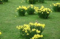 Лондон в марте – Пасхальные и другие мероприятия