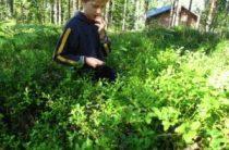 Отдых в Финляндии с детьми в коттедже – только преимущества!